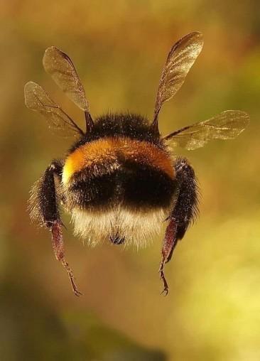 Seamos como las abejas